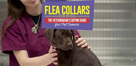 flea collar for puppies flea collar for dogs the vet s buying guide for pet owners