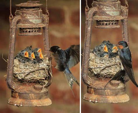 awesome diy bird houses for a garden amazing diy