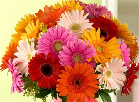 Home Decor Trends History by History And Meaning Of Gerbera Daisies Proflowers Blog