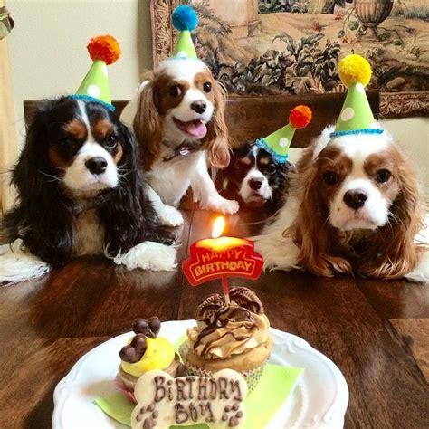 new year animal birthday 25 best ideas about happy birthday on