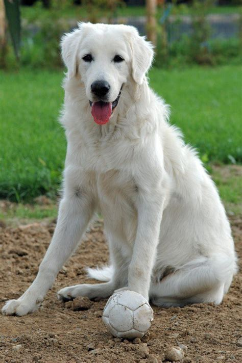 names for white dogs names hundreds of suggestions by color breed size and