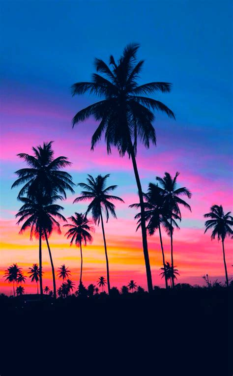 colorful palm trees blue colorful vibes orange palm trees pink