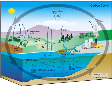 cycle diagram file carbon cycle diagram svg wikimedia commons
