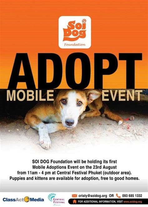 soi foundation soi foundation to hold puppy and kitten mobile adoptions event phuket