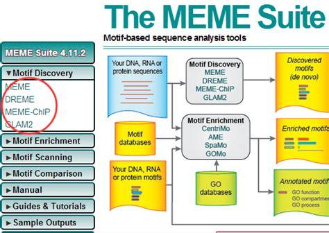 Meme Motif - 自学chip seq分析第八讲 寻找motif 生信菜鸟团
