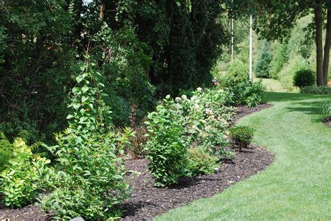 garden shrubs shrubs a woodland garden of flowering shrubs the tree center