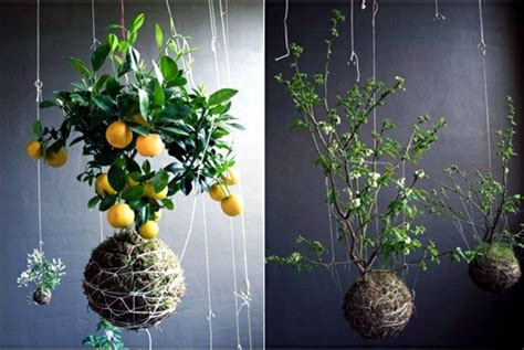 Design For Indoor Flowering Plants Ideas 20 Ideas For Hanging Flower Pots Indoor Plants Exhibit Creative Interior Design Ideas Ofdesign