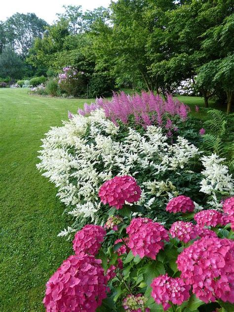keepstringlights astilbe this perennial is a great