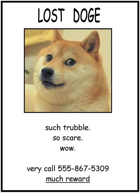 Doge Meme Meaning - should i put lost doge posters all over my school