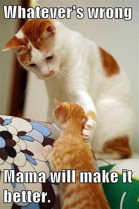 dump a day attack of the funny animals 48 pics