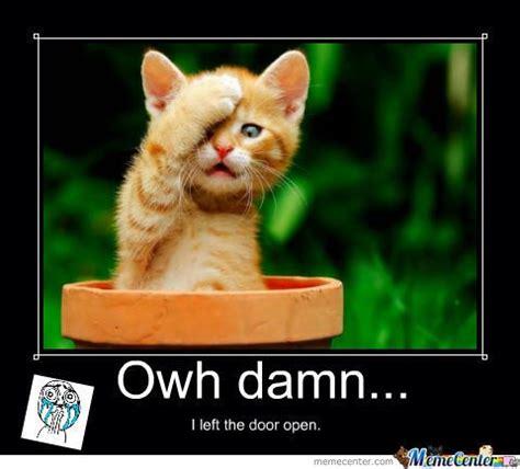 Cute Kitten Meme - 701 best lolcats make me smile images on pinterest