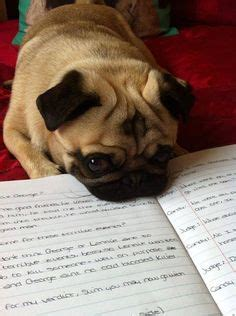 what does the pug say now ummm the ummm what does that one say oh if i don t get it