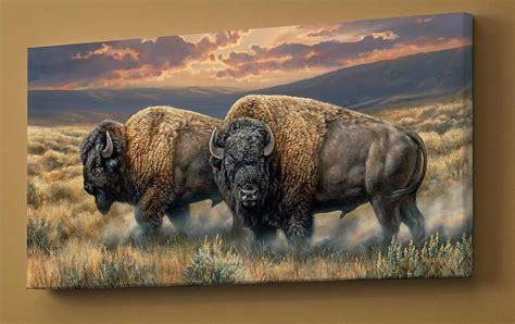 dusty plains bison wrapped canvas wild wings