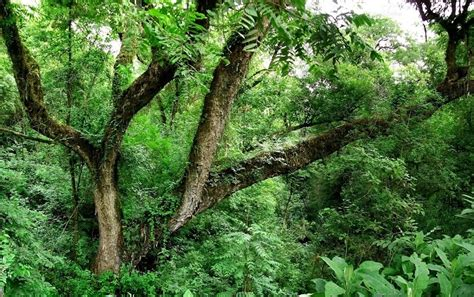 imagenes de animales y plantas de la selva plantas de la selva lo que debes saber sobre estas