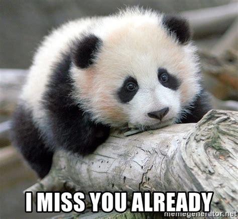 Sad Panda Meme Generator - i miss you already sad panda meme generator