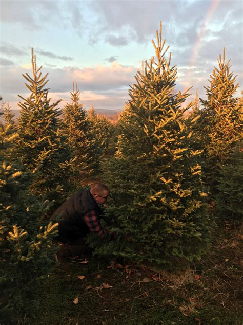 finding the perfect christmas tree cut your own