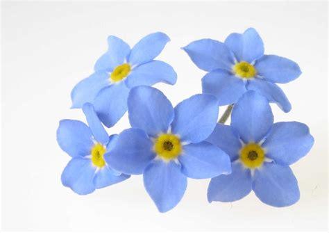 nontiscordardime fiore feste di carnevale parrocchia mater ecclesiae
