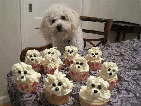 birthday cake petco schnoodle cupcakes recipes birthday cakes birthdays and