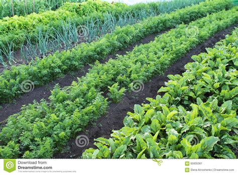 vegetable beds garden with vegetable beds stock image image of leaf