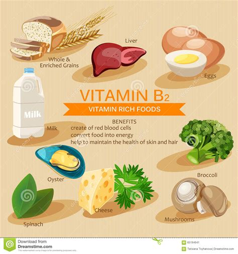 riboflavina alimenti vitamina b2 vitaminas y comidas de los minerales dise 241 o