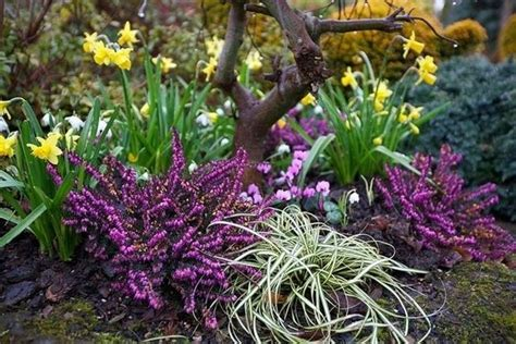fiori invernali per giardino come preparare un giardino invernale crea giardino
