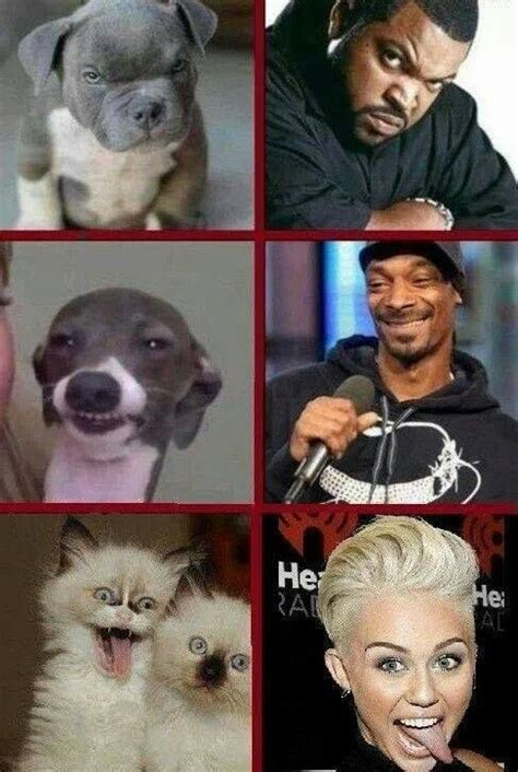 are cubes bad for dogs cube snoop dogg miley cyrus lol lol snoop dogg and cubes