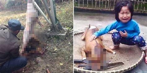 anjingnya dimasak  gadis  ledakkan vietnam