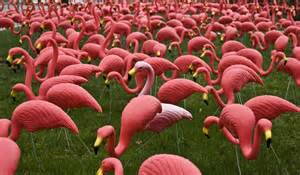 pink flamingos black swans and pink flamingos five principles for force