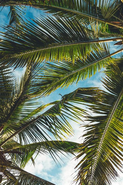palm tree pictures hd   images  unsplash