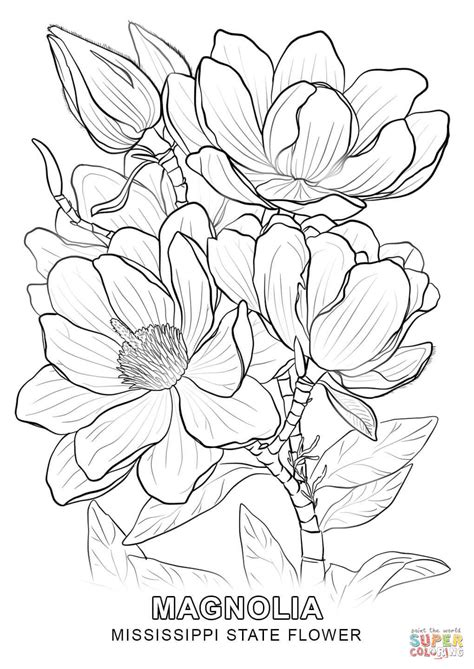 magnolia tree coloring pages mississippi state flower coloring page free printable