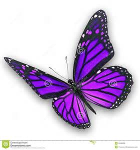 purple butterfly flying stock photo image 46588366