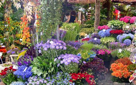 beautiful flower garden wallpapers  crazy frankenstein