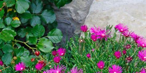 fiori per aiuole estive fiori d estate per il giardino cose di casa