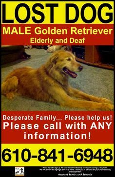 golden retriever hip keep an aye out for this pair you seen them someone you new