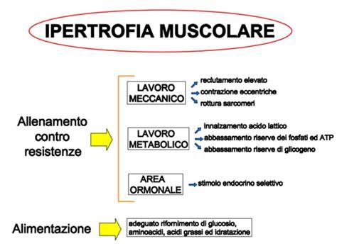 alimentazione per massa muscolare uomo ipertrofia muscolare la guida completa