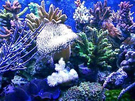 Batu Kerang Laut sea images coral reefs wallpaper photos 114546