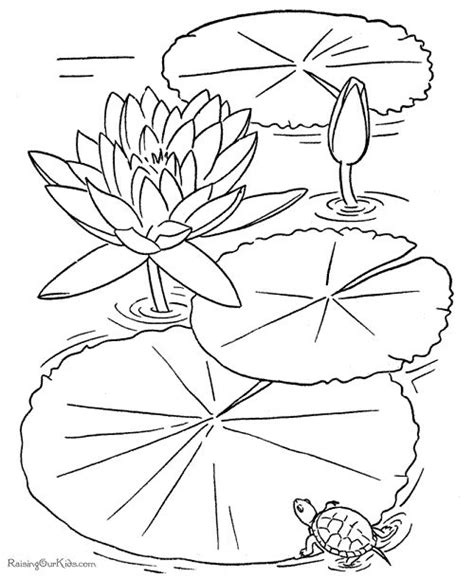 pond turtle coloring page turtle pond coloring pages pinterest coloring