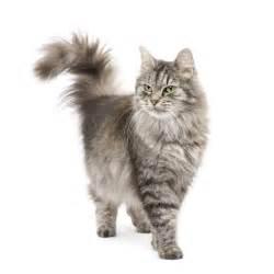 salon du chat