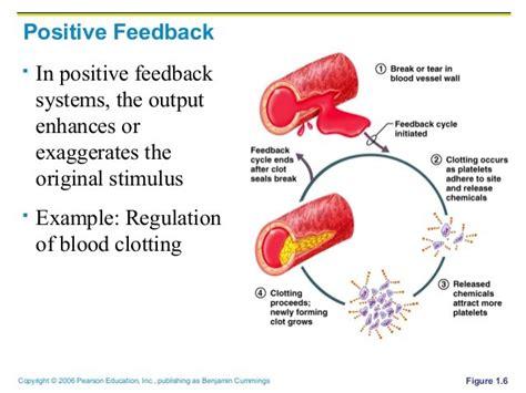 exle of positive feedback positive feedback mechanism lm white biology