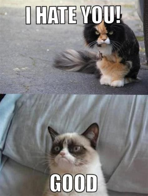 Angry Cat Good Meme - i hate you grumpy cat meme