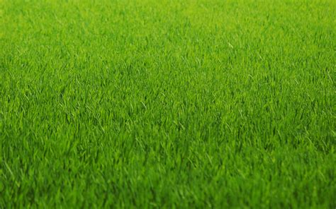 wallpaper hd green grass green nature grass fields lawn hd wallpapers ramblings