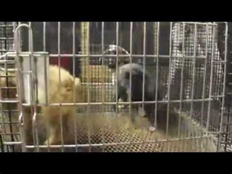puppy mills in ohio farmerstown ohio travel