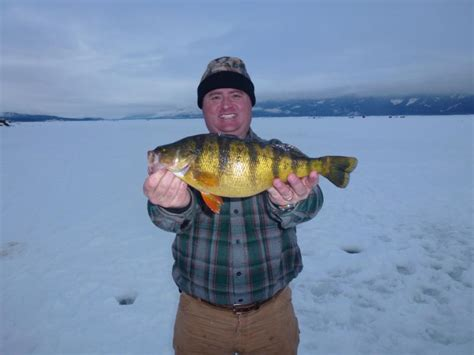Idaho Records Fisher Ties Idaho Yellow Perch Record Fish