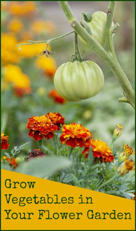 what vegetables can i grow in my garden growing vegetables in your flower garden foodie