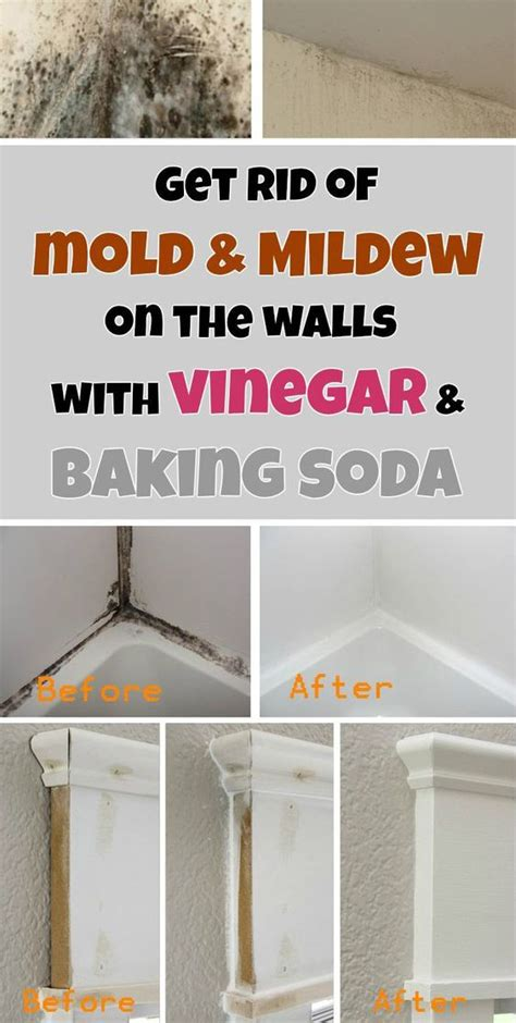 how to get rid of mold on walls in bedroom get rid of mold mildew on the walls with vinegar and