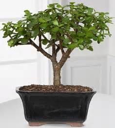 shui plants indoors