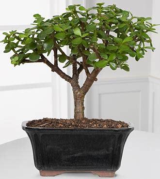 plants in bedroom feng shui feng shui tips ken lauher feng shui plants