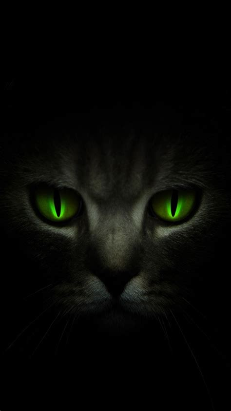 wallpaper cat for android wallpapers dark cat android wallpapers