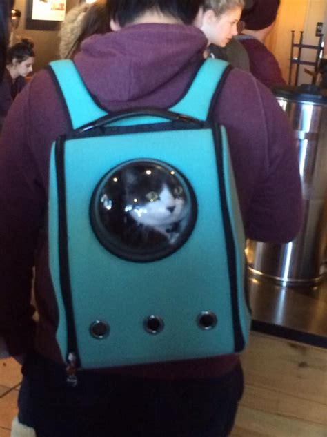 adorable cat backpack will ruin your cat s while immediately improving your own mic