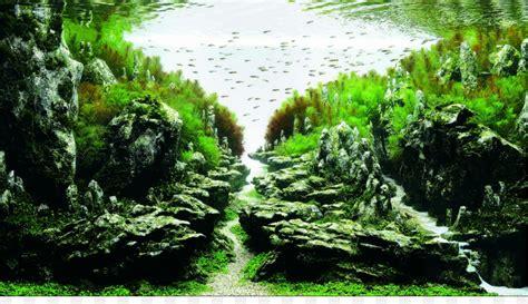 ada aquascape ada malaysia aquascaping aquatic plants aquarium